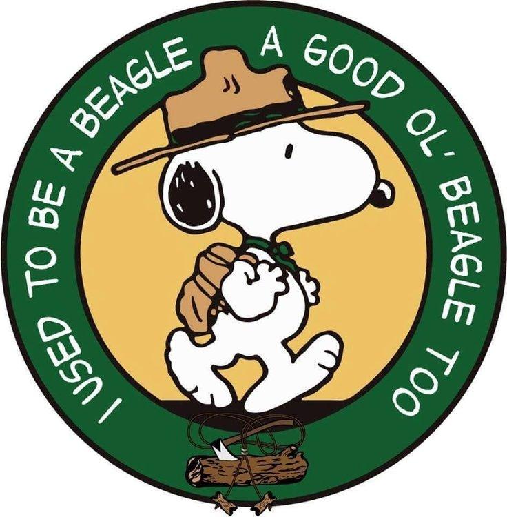 beagle-WB.jpg